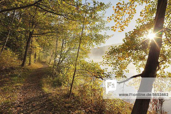 Deutschland  Bayern  Ellertshauser See  Blick auf nebligen See mit Bäumen