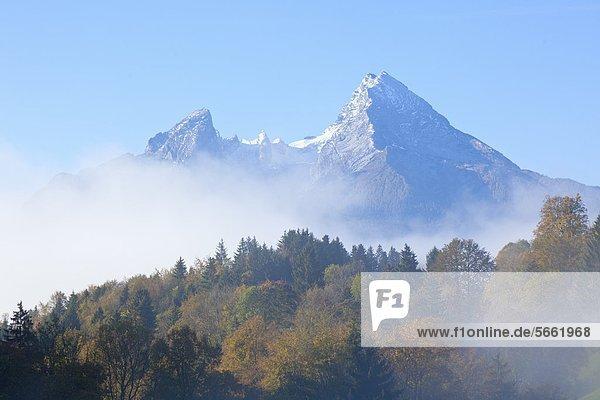 Wald und Nebel vor Watzmann  Berchtesgadener Alpen  Berchtesgadener Land  Bayern  Deutschland  Europa