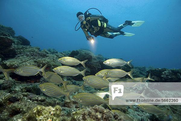Bodrum Mittelmeer Salema Türkei