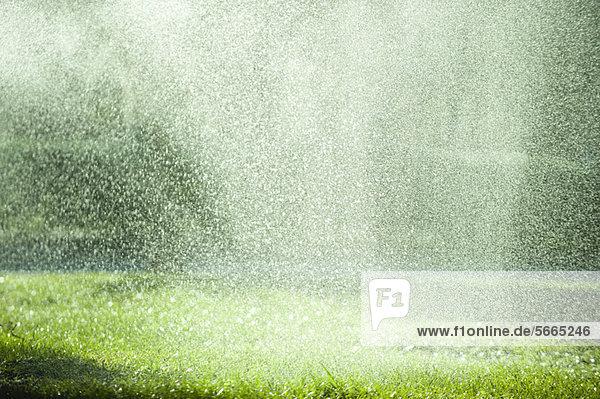 Regen  der auf Gras fällt