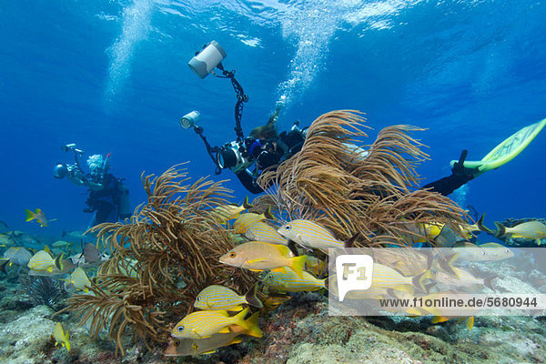 Photographers on Coral Reef