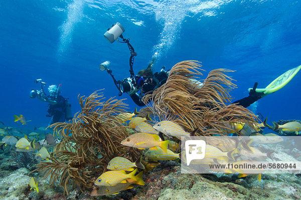 Fotografen am Korallenriff