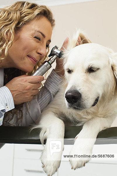 Tierärztlicher Untersuchungshund im Amt