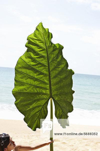 Frau  Strand  Pflanzenblatt  Pflanzenblätter  Blatt  halten  übergroß