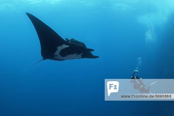 Scuba diver  underwater photographer taking pictures of Giant Oceanic Manta Ray (Manta birostris)  Roca Partida  Revillagigedo Islands  Mexico  America  Eastern Pacific