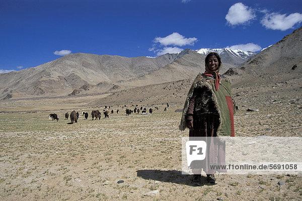 Yak-Hirtin  Yaks  nahe Salzsee Tazang Tso  Changthang  Ladakh  indischer Himalaya  Nordindien  Indien  Asien