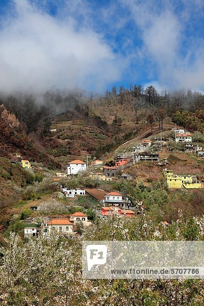 Europa blühen Madeira Portugal Jahreszeit