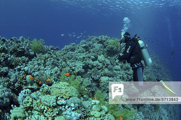 Taucher im Blue Hole  Dahab  Rotes Meer  Ägypten  Afrika