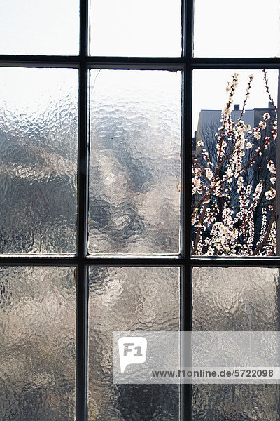 Deutschland  Blühende Zweige durch altes Fenster