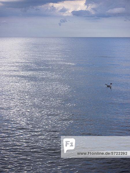 Deutschland  Möwe schwimmt bei bewölktem Himmel über der Ostsee