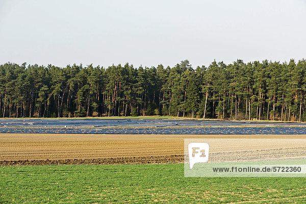 Deutschland  Blick auf den Aspargusanbau Ende März