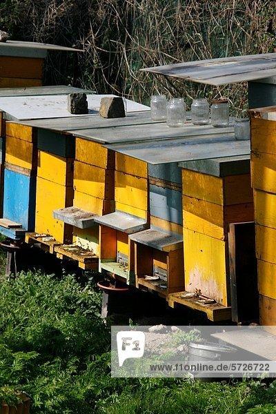 Ländliches Motiv ländliche Motive Feld Größe Biene