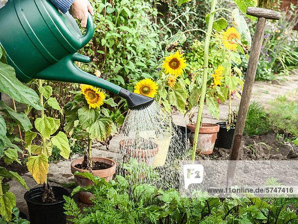 Handwasserpflanzen im Garten