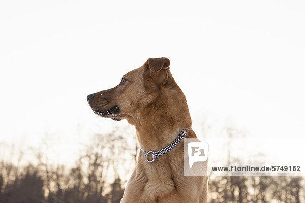 Nahaufnahme des im Freien stehenden Hundes