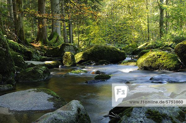 Saußbach im Herbst  Bayerischer Wald  Deutschland