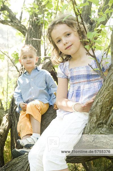 Junge und Mädchen sitzen im Baum