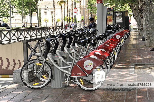 Bikes for rent  bicycle rental  city center  Seville  Andalusia  Spain  Europe