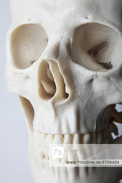 Skelett  Totenkopf