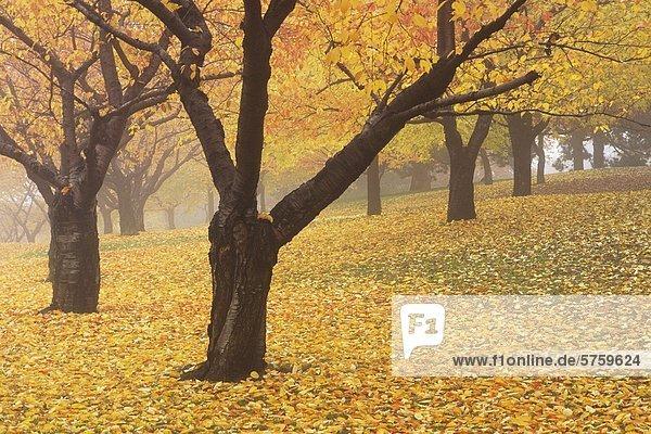 High Park in Herbstfarben Toronto  Ontario  Kanada.
