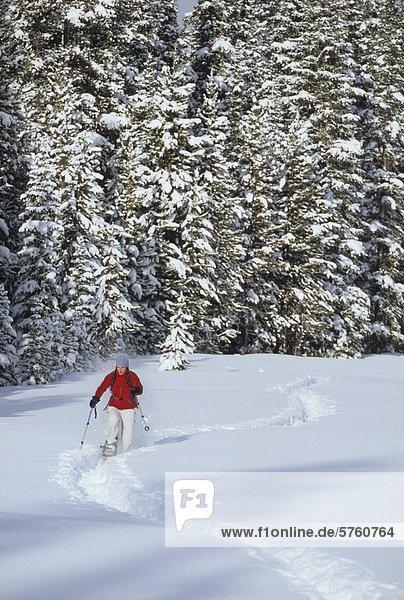 Eine weibliche Schneeschuhwanderer Spur nahe Spray Seen in Kananaskis Country  Canmore  Alberta  Kanada