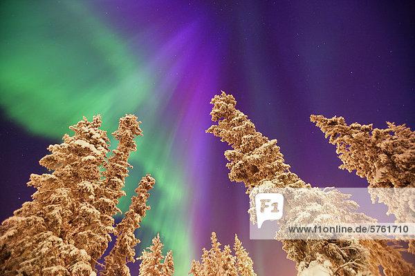 Aurora Borealis oder Nordlicht  Yukon.