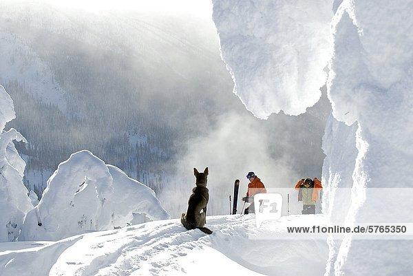 Start  Hund  unbewohnte  entlegene Gegend  2  Ski  baufällig  British Columbia  bekommen  Nelson