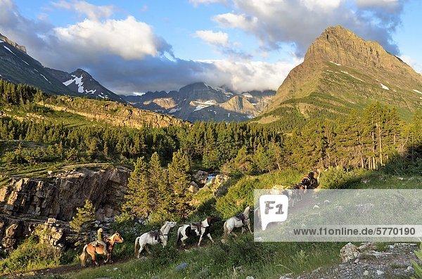 Pferd auszubilden  viele Gletschergebiet  Glacier National Park  Montana  Vereinigte Staaten von Amerika