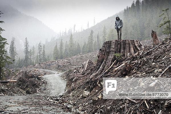 Ein Mann steht auf eine westliche Rotzeder-Lebensbaum (Thuja Plicata) Stumpf 11 ft Durchmesser in einem Primärwald Clearcut im Gordon River Valley in der Nähe der Stadt Port Renfrew. 75 % der Vancouver Island produktive alte Wälder haben angemeldet  davon 90 % die Tal-Böden  wo die größten Bäume wachsen und reichsten Biodiversität befindet  Vancouver Island  British Columbia  Kanada.