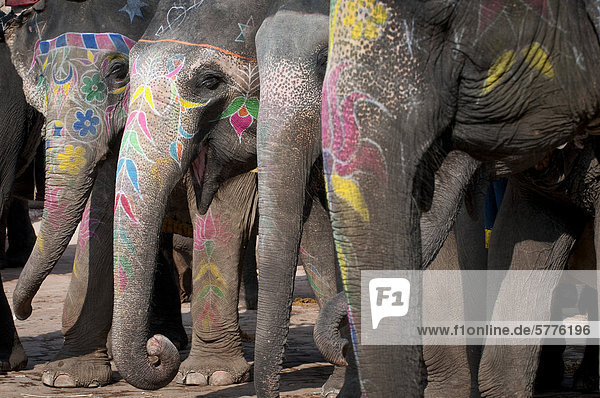 Painted elephants  Amer Fort  Amber Fort or Amber Palace  Jaipur  Rajasthan  India  Asia