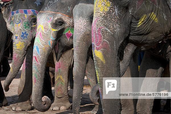 Bemalte Elefanten  Festung von Amber oder Amber Fort  Jaipur  Rajasthan  Indien  Asien