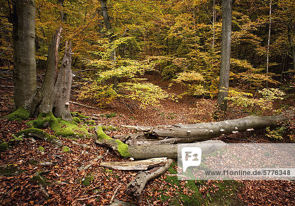 Herbstwald Herbstwald