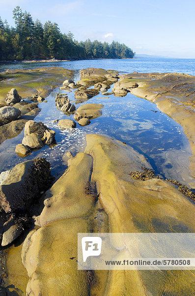 Rocks and tidepools  Cable Bay  Galiano Island  British Columbia  Canada
