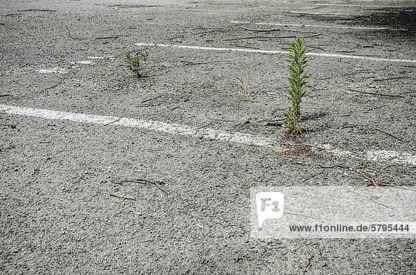 Verwaister Parkplatz im evakuierten Stadtzentrum Erdbebengebiet Christchurch  Südinsel  Neuseeland