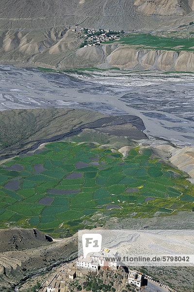 Blick auf Felder und buddhistisches Kloster oder Gompa Ki  Spiti-Tal  Lahaul und Spiti  indischer Himalaya  Himachal Pradesh  Nordindien  Indien  Asien