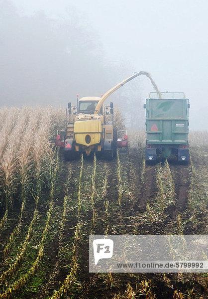 Mähdrescher schüttet an einem nebligen Tag Weizen in Lkw ein