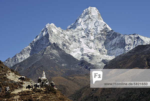 Yaks am Stupa in Fron des Berges Ama Dablam in Nepal