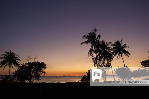 Silhouette von Palmen bei Sonnenuntergang