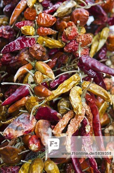 Viele getrocknete Chilischoten (bildfüllend)