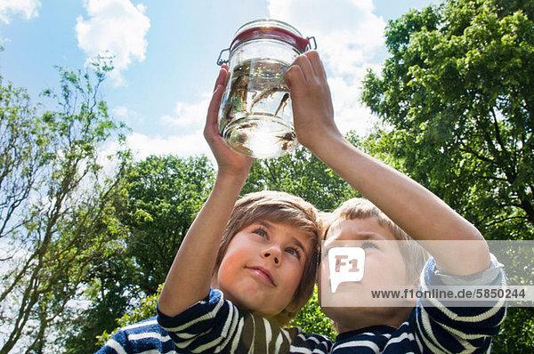 Zwei Jungen schauen auf Kaulquappen im Glas
