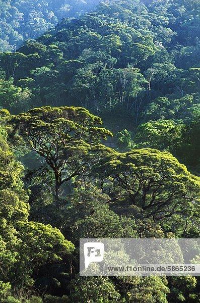 Atlantischer Regenwald  Serra Dos Órgãos Nationalpark  Brasilien