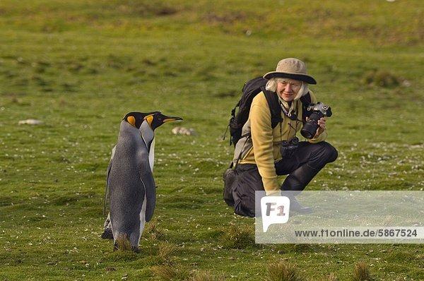 Touristen- und König Pinguine  Aptenodytes Patagonicus  Volunteer Point  Falkland-Inseln