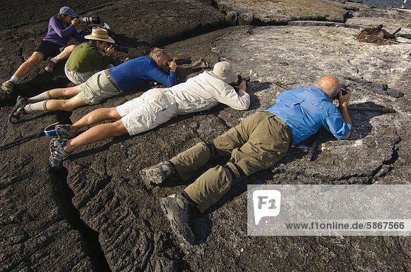 Touristen fotografieren Schachteln Galapagosscharbe  Phalacrocorax Harrisi  Galapagos-Inseln