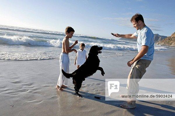 Mann  Strand  Hund  Mittelpunkt  2  Erwachsener  spielen