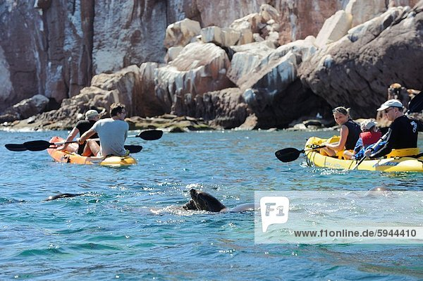 Mexico  Baja California  World Heritage Site  Los Islotes island  Kayaking and sea lion watching