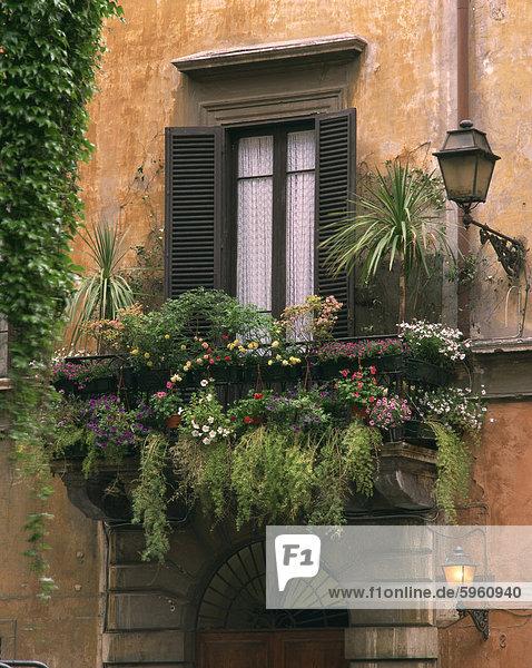 Window display near Piazza Navona  Rome  Lazio  Italy  Europe