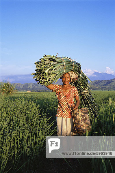Woman carrying palm fronds  standing in rice field  Refina  Flores  Indonesia  Southeast Asia  Asia