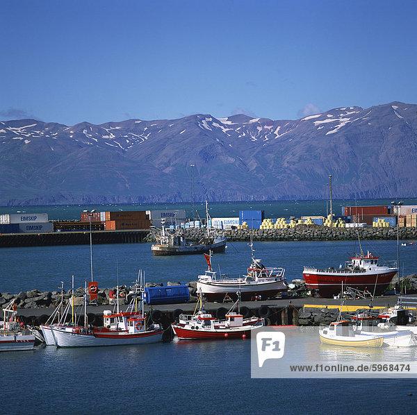 Fischerboote im Hafen  Husavik  North Island  Polarregionen