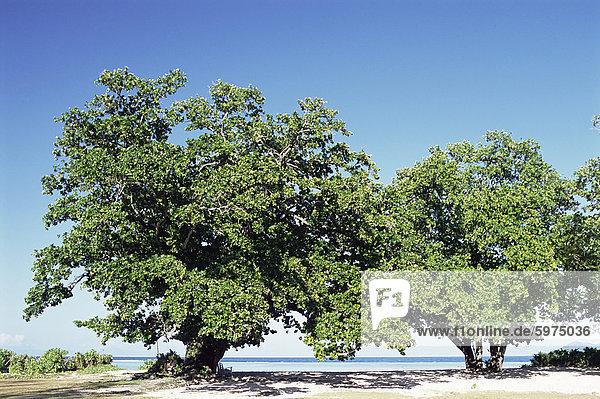 Bäume  Anse Union  Westküste der Insel La Digue  Seychellen  Indischer Ozean  Afrika