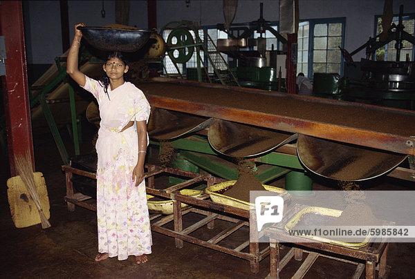Tee-Fabriken  Nuwara Eliya Bereich  Sri Lanka  Asien