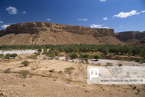 Fields and date palms in the fertile valley of Wadi Doan  with arid escarpment behind  in the Wadi Hadramaut  south Yemen  Middle East
